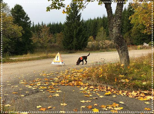 Spürhund Keno während der Arbeit