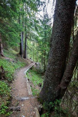 Ein sanfter Waldweg führt bergab (?)...