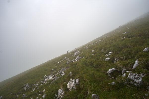Unterhalb des Gipfels gibt es Steinböcke zu sehen.