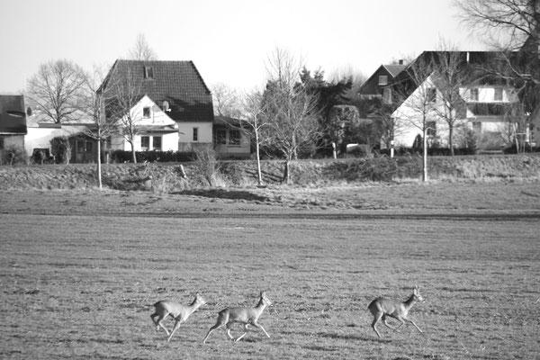 ...und auf dem Rückweg zur Straße eine tierisch schöne Überraschung...
