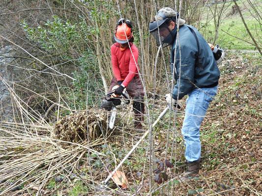 Pflegearbeiten am Rotsee