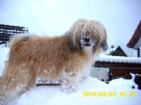 Ruscha im Schneewinter 2010