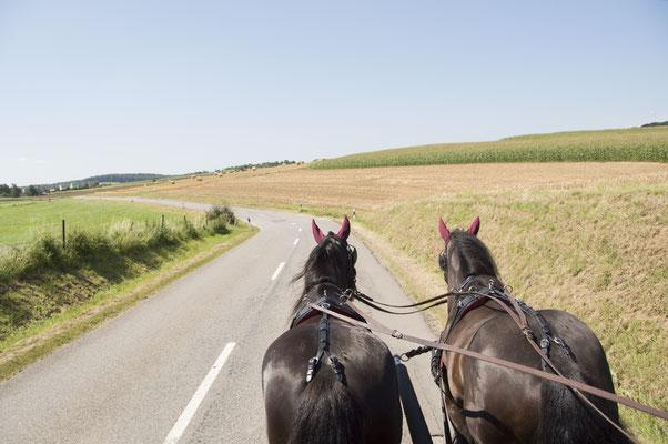 Kutschfahren - eine Freizeitaktivität