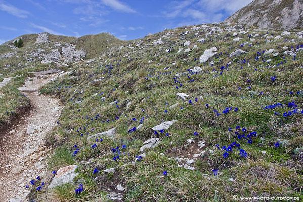 Die Natur ist ein prima Gärtner: Nach der Waldgrenze kann man ins Blumenparadies eintauchen!