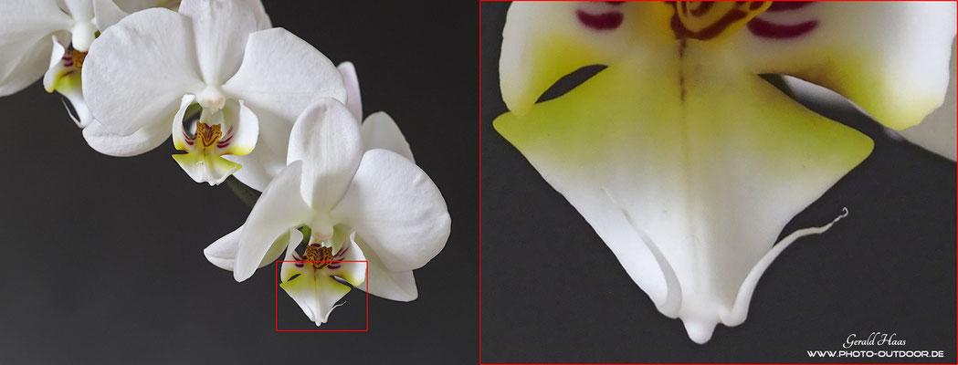 Freihand-Aufnahme mit umgerechnet 840 mm Brennweite (KB). Der Bildstabilisator der Kamera in Verbindung mit dem Stab. des Objektivs lässt sogar noch bei 1/4 sek. scharfe Aufnahmen zu. Sehr beeindruckend!