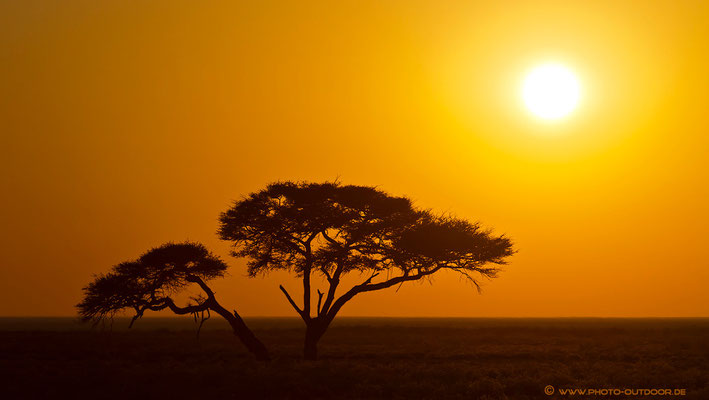 Sonnenaufgang in Etoscha