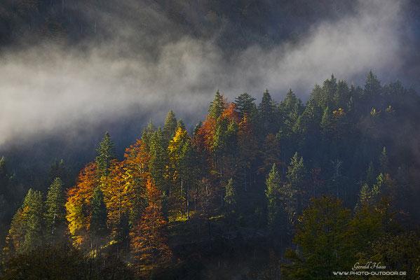 Ein Sonnenspot am frühen Morgen bringt das Herbstlaub richtig zum Leuchten!