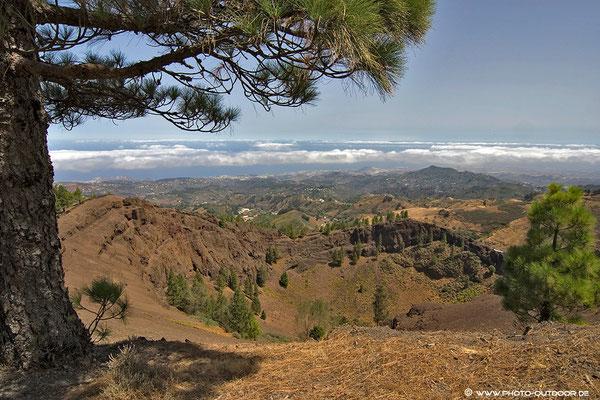 Urige Kiefernwälder säumen die Inselmitte