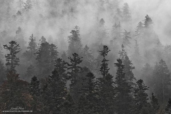 """Der gleiche Wald bei """"Schlechtwetter"""". Die durchziehenden Wolken verleihen der Szenerie einen grafischen Charakter."""