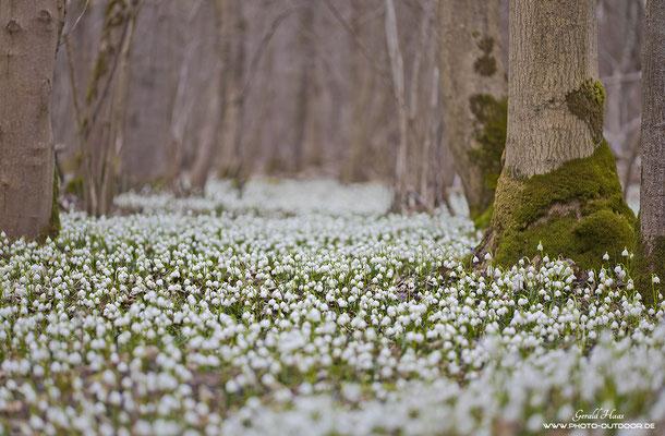 Auch Weiß, aber kein Schnee!