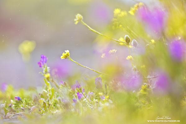 Die Blumen auf La Palma lassen das Herz jedes Makrophotographen höher schlagen!