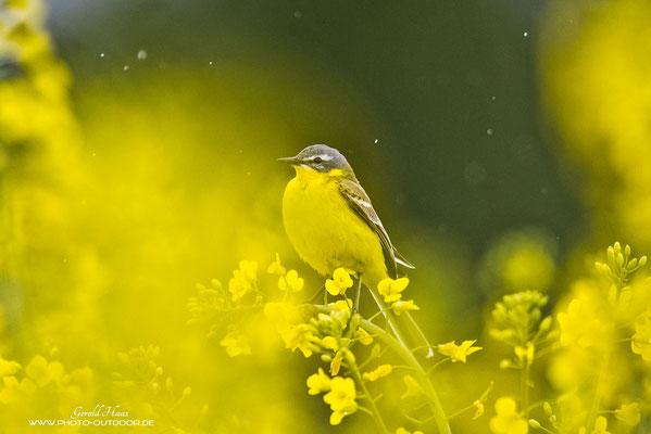 Der Autofokus sitzt auch bei Vögeln: Bei Regen,...