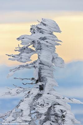 Eisformationen im toten Wald