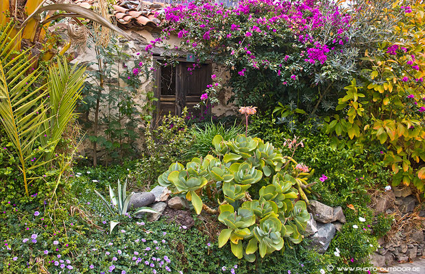 Garten in Fataga/Gran Canaria