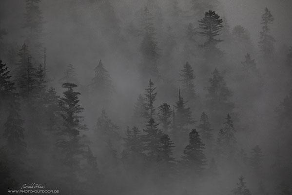 Wenn der Nebel durch den Bergwald zieht, ergeben sich mystische Szenerien.