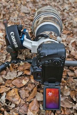 Bodennahe Aufnahmen werden durch das Klappdisplay wesentlich erleichtert.
