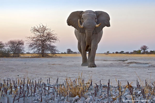 Reine Nervensache - die Elefantensperre wird hoffentlich halten...