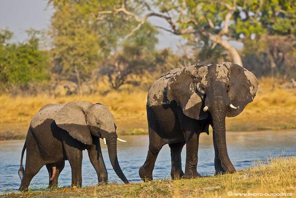 Elefanten im Babwata-NP/Nordnamibia. Die Piste in diesem Nationalpark ist mehr als abenteuerlich... und nur für 4x4 Fahrzeuge zugelassen. Je mehr Bodenfreiheit, umso besser!!