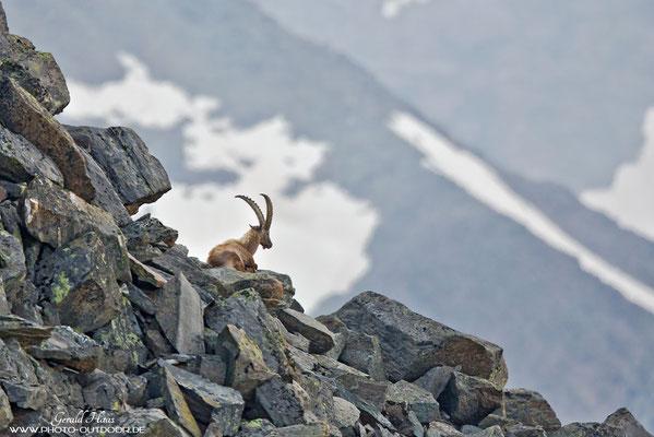 Bei einer Bergtour begegnen wir sogar auf einer Höhe von knapp 3300 Meter  diesem Steinbock. Und das Tele ist immer dabei ;-)