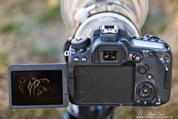 Rückansicht der Canon EOS 90D: Alle wesentlichen Bedienelemente sind beim Fotografieren mit dem Daumen zu erreichen. Eine Einhandbedienung ist damit weitgehend gewährleistet.