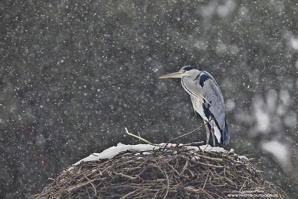 Die Kamera wurde bei Schnee...