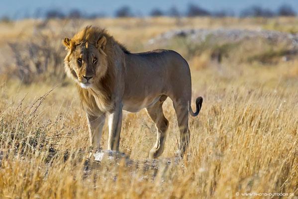 Das Männchen folgt ihr auf den Fuß.