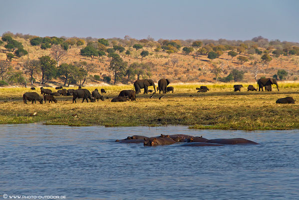 Reges Treiben am Chobe-River