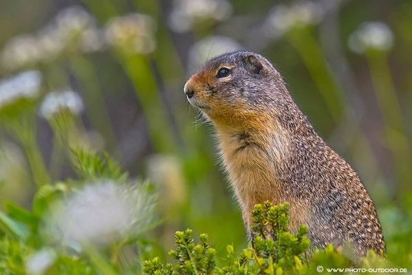 Squirrel im Blumenmeer.