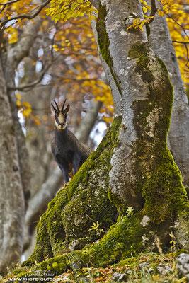 Eine weitere Begegnung mit den Gänsen im Herbstwald :))