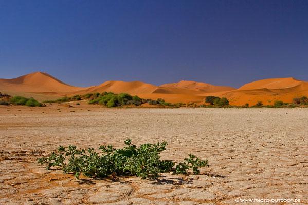 Überlebenskampf in der Wüste