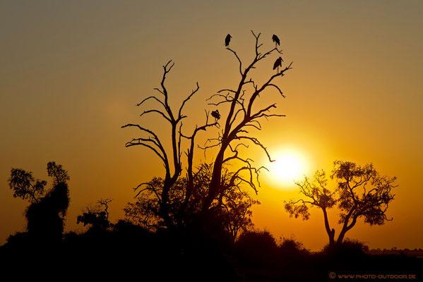 Sonnenuntergang im Chobe-NP/Botswana