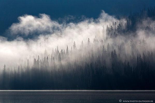 Früh morgens unterwegs zum Bowron Lake Provincial Park: Nebel zieht durch den Wald.