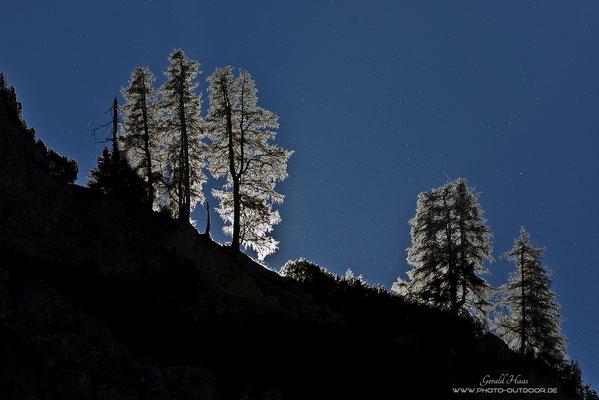 Eine sehr spezielle Lichtsituation auf einem Karwendel-Gebirgszug: Bäume im Gegenlicht!