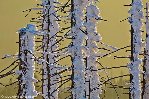Windgepresster Schnee auf Totholz (Nationalpark Bay. Wald).