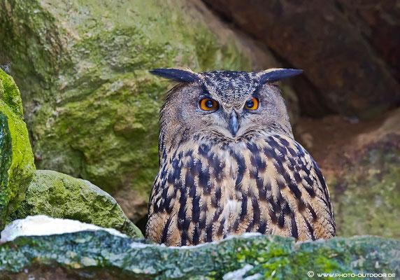 Wenn photo-outdoor vorbeischaut, kuckt sogar ein müder Uhu mit großen Augen!