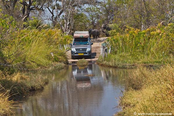 Von hinten kommen Elefanten, dann doch lieber durch´s Wasser: Third Bridge im Moremi-NP / Botswana