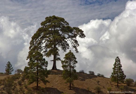 Über den Wolken von Gran Canaria
