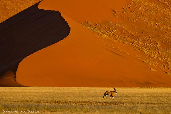 Oryxantilope vor Namibdüne