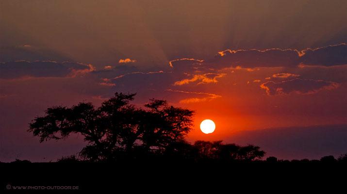 Morgens im Nossob-Camp/Kgalagadi-NP