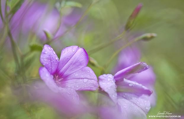 Blumenträumerei