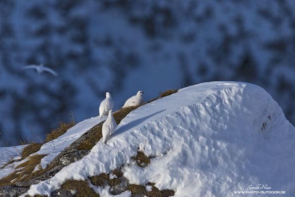 Ready for take off: Nach dem Frühstück fliegen sie ab zur gegenüberliegenden Felswand.
