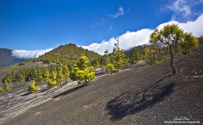 """Die """"Wolkenwelle"""" rollt über die Cumbre Vieja"""