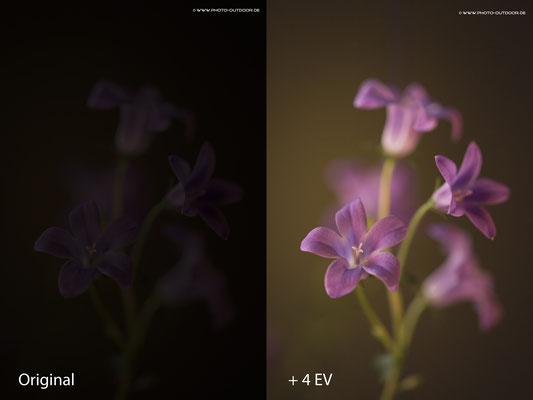 Original und um +4 EV aufgehelltes Foto. Das Farbrauschen ist mit etwas EBV leicht in den Griff zu bekommen.