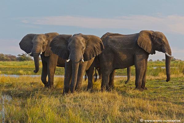 Elefantenbegegnung am Kwando