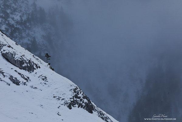 Ein einzelner Baum am Berghang trotzt den winterlichen Bedingungen.