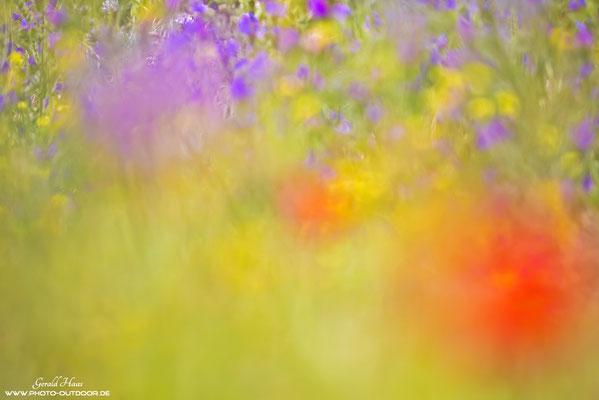 Abstrakte Makrospielerei in der Blumenwiese