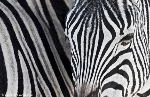 Zebrastreifen...