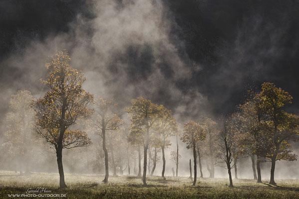 Die Magie des Augenblicks: Nur für 10 Minuten war dieser Nebel vorhanden und hat in der aufgehenden Sonne die Landschaft verzaubert.