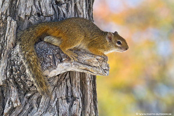 Ein Hörnchen im Ausguck: Was gibt´s hier alles zu sehen...
