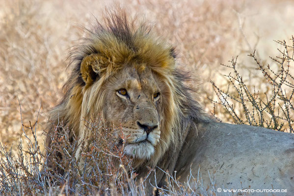 Löwenpascha
